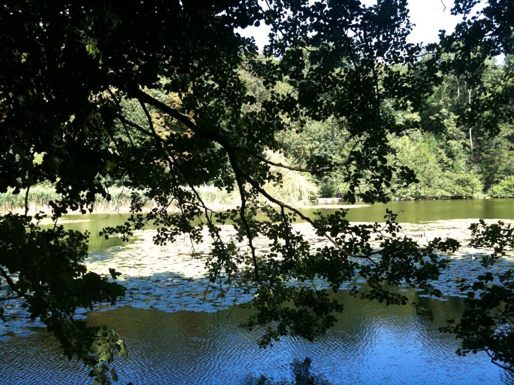 Etang du Bois de Saint Cucufa à Vaucresson
